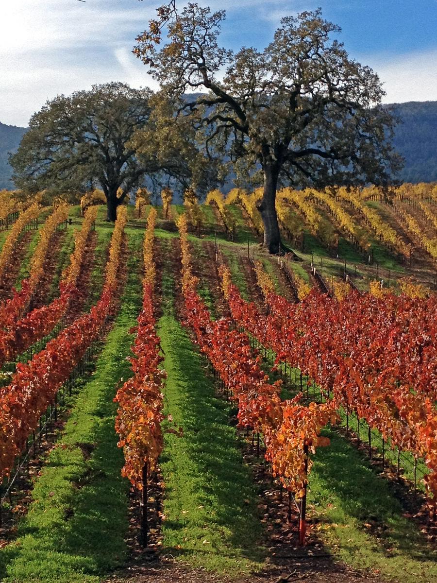 B.R. Cohn Winery, Sonoma County, California