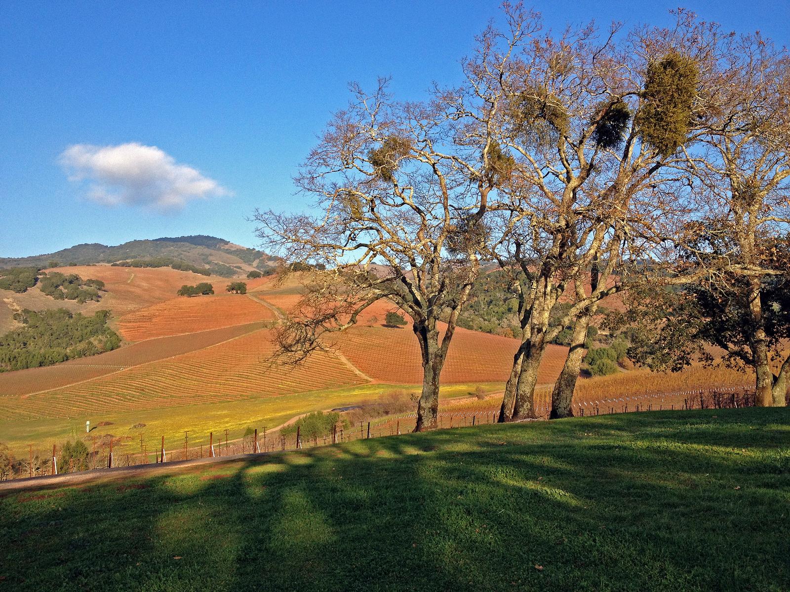 Kunde Estate, Kenwood, Sonoma County, California