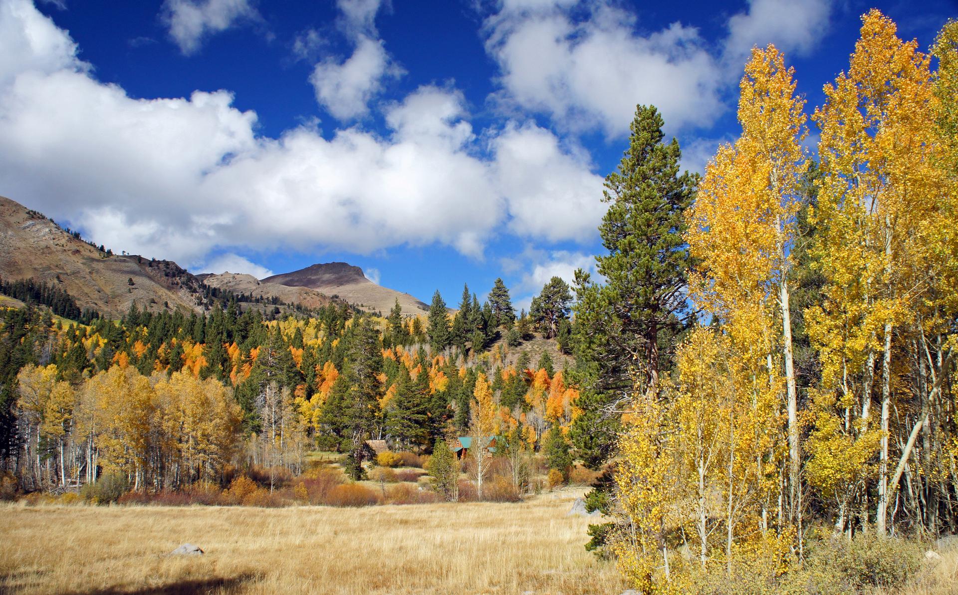 fall colors near Carson Pass, south of Lake Tahoe, California