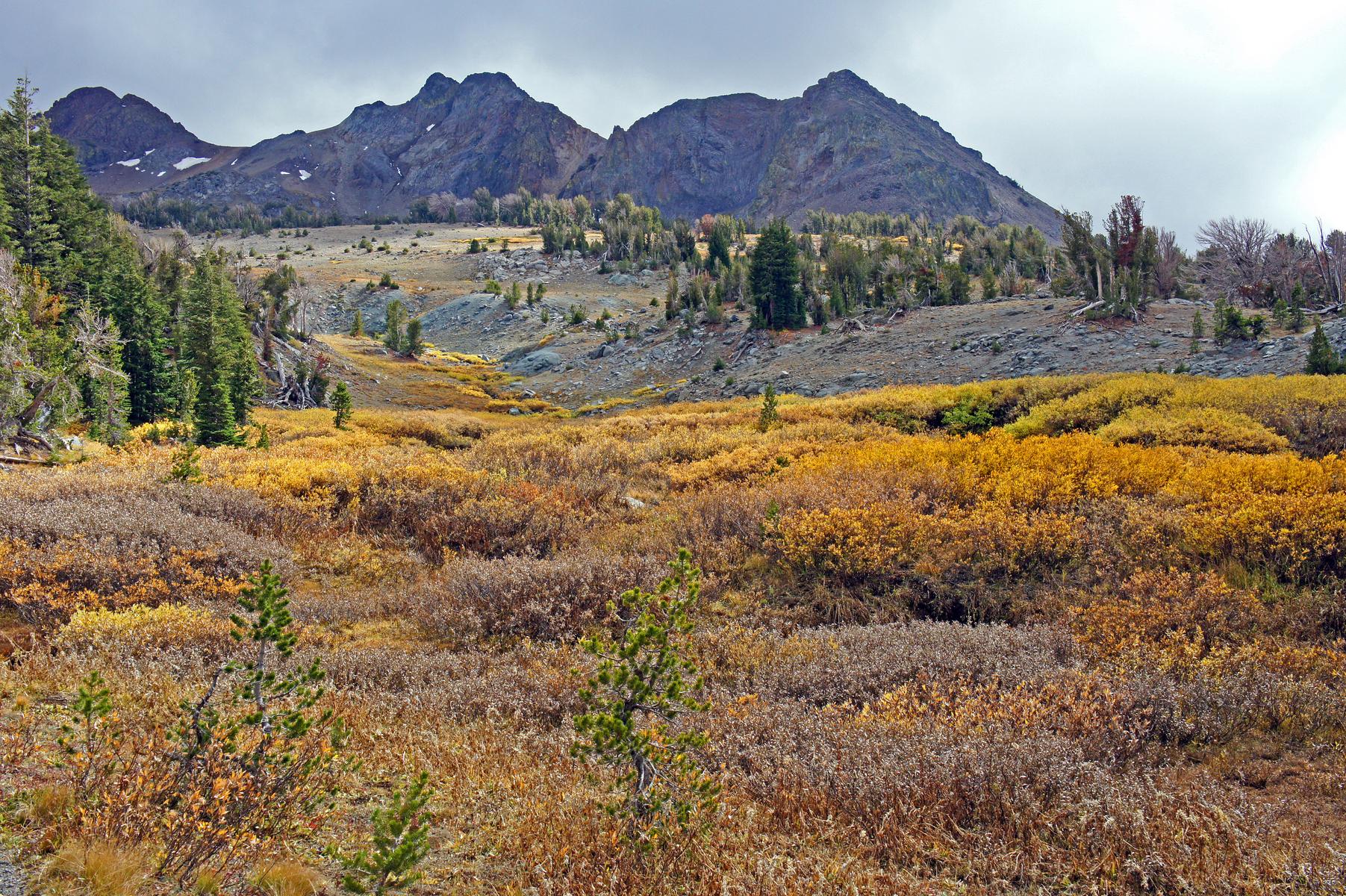 near Carson Pass in the Mokelumne Wilderness, California