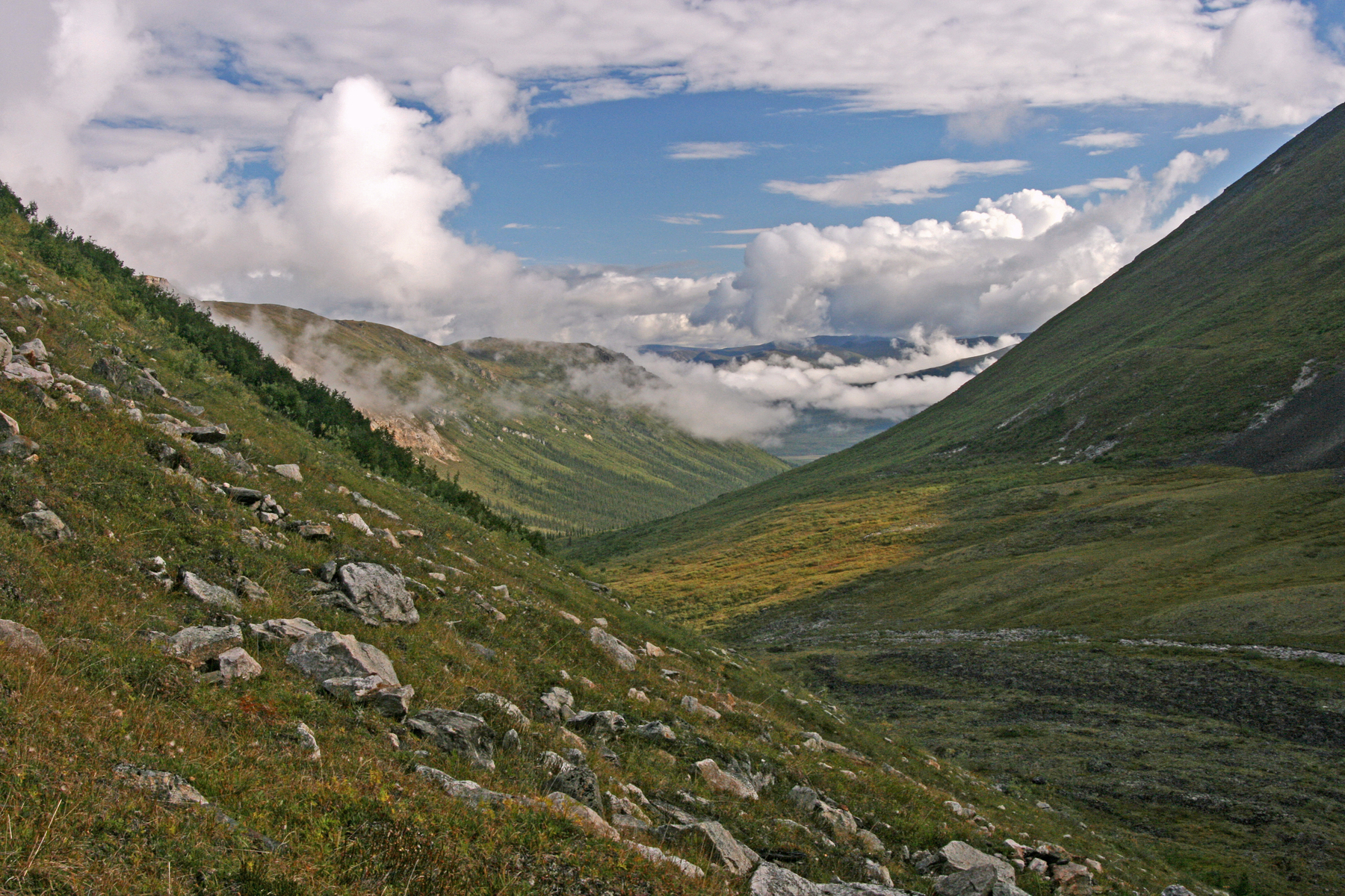 tundra in the Arrigetch Peaks region, Gates of the Arctic National Park, Alaska